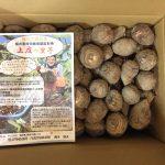 福井県大野市から名産の里芋5kgが到着!【2016年版】